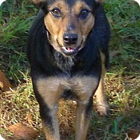 Adopt A Pet :: Franny - Livingston, TX