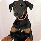 Adopt A Pet :: Jane