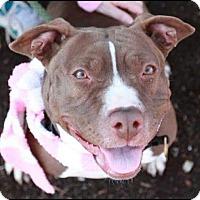 Adopt A Pet :: Taffy - Kewanee, IL