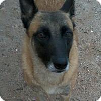 Adopt A Pet :: Chatita - San Ysidro, CA
