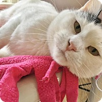 Adopt A Pet :: Kinsey - Salisbury, MA