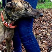 Adopt A Pet :: JA's Lucy - Gerrardstown, WV