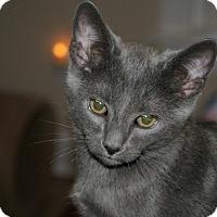 Adopt A Pet :: Lt. Dan - Youngsville, NC