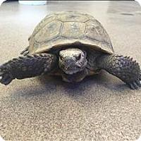 Adopt A Pet :: Henry - Monterey, CA