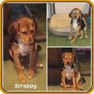 Beagle Mix Puppy for adoption in Malvern, Arkansas - SCRAPPY
