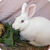Adopt A Pet :: Garth - Alexandria, VA