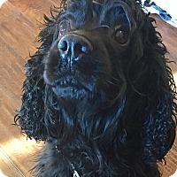 Adopt A Pet :: Mimi - Santa Barbara, CA