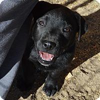 Adopt A Pet :: Olive - Peyton, CO