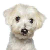 Adopt A Pet :: Freshie - Oakland Park, FL
