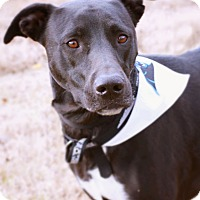 Labrador Retriever Mix Dog for adoption in Monroe, North Carolina - Raven
