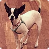 Chihuahua Mix Dog for adoption in Atlanta, Georgia - Lucky