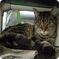 Adopt A Pet :: Cheryl - Elyria, OH