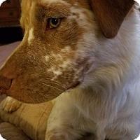 Adopt A Pet :: TX/Bert - Hampton Cove, AL