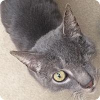 Adopt A Pet :: Popeye - Chula Vista, CA