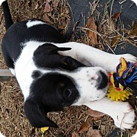 Adopt A Pet :: Hero - Albany, GA