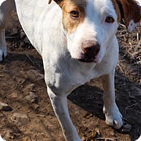 Adopt A Pet :: Buck - Mississauga, ON