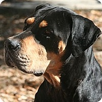 Adopt A Pet :: Ansel - Alachua, GA