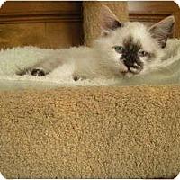 Adopt A Pet :: Paisley - Huffman, TX