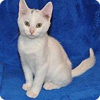 Adopt A Pet :: Dice - Richmond, VA