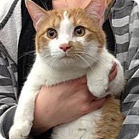 Adopt A Pet :: AJ - Troy, OH