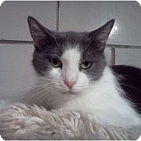 Adopt A Pet :: Valentine - Centerburg, OH