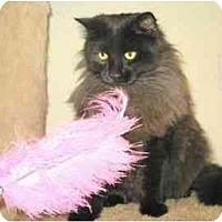 Adopt A Pet :: Finnigan - Davis, CA