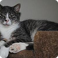 Adopt A Pet :: Gordon - Waxhaw, NC