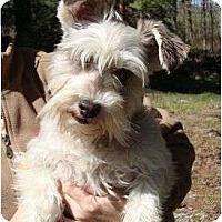 Adopt A Pet :: Chloe - Staunton, VA