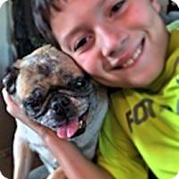 Adopt A Pet :: Ruth - Austin, TX