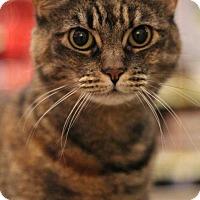 Adopt A Pet :: Maya - Sacramento, CA