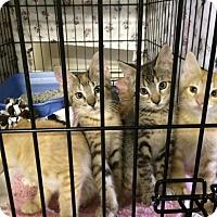 Adopt A Pet :: Gilbert - Byron Center, MI