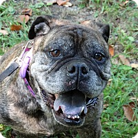Adopt A Pet :: Adopted! Leah - Prospect, CT