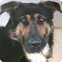 Adopt A Pet :: BIXBY VON BEHR - Los Angeles, CA