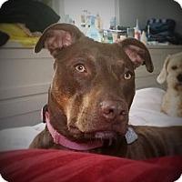 Adopt A Pet :: Summer~meet me! - Glastonbury, CT