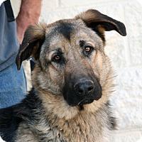 Adopt A Pet :: Diego - Palmdale, CA
