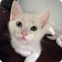 Adopt A Pet :: Deno - Mission Viejo, CA