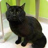 Adopt A Pet :: Bojangles - Janesville, WI