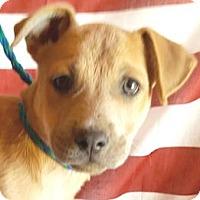 Adopt A Pet :: Cypress - Sunnyvale, CA