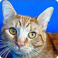 Adopt A Pet :: Julian - Sherwood, OR