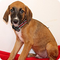 Adopt A Pet :: Emo~meet me~ - Glastonbury, CT