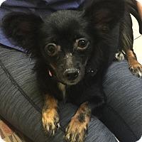 Adopt A Pet :: Layla - Boca Raton, FL