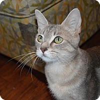 Adopt A Pet :: Jasmine - Flower Mound, TX