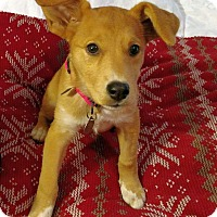 Adopt A Pet :: Roseanna - Knoxville, TN