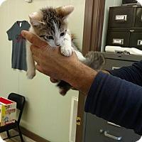 Adopt A Pet :: Amino - Mt. Vernon, IL