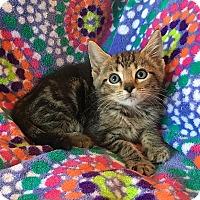 Adopt A Pet :: Spice - Tampa, FL