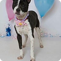 Adopt A Pet :: Mable - Kenner, LA