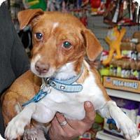 Adopt A Pet :: Beth - Brooklyn, NY