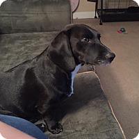Adopt A Pet :: Margot - Dallas, TX