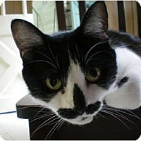 Adopt A Pet :: Melissa - House Springs, MO