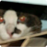 Adopt A Pet :: Monroe - Scottsdale, AZ
